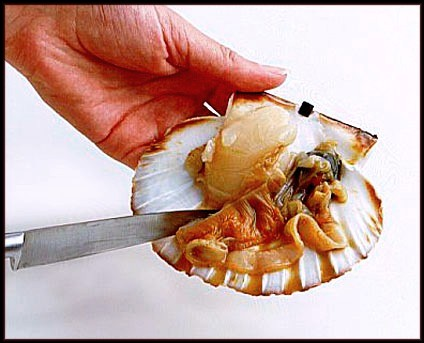 touching a dead scallop