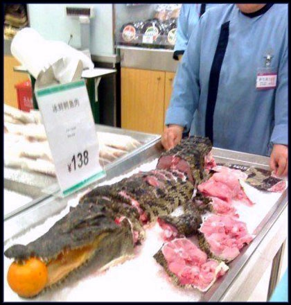 alligator meat