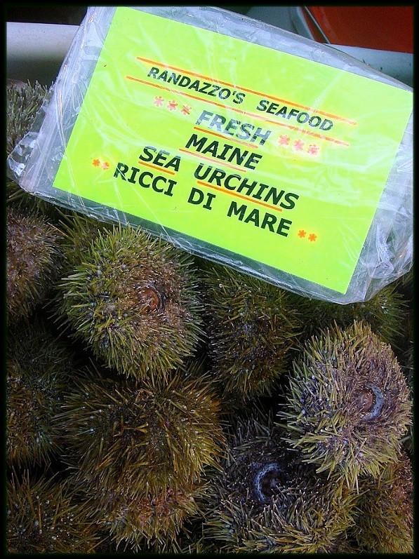 sea urchin food