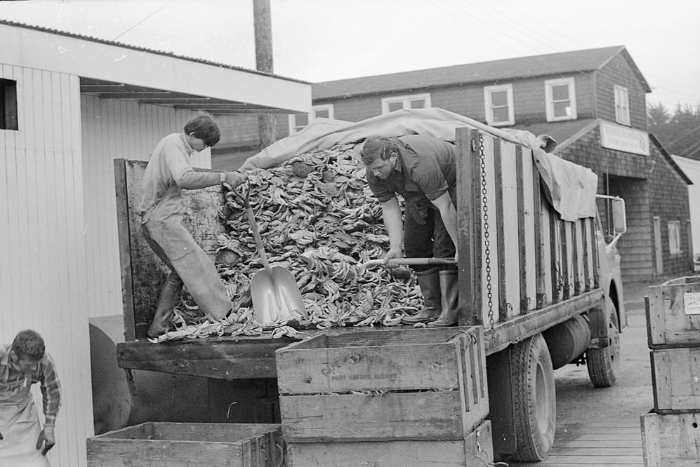 Unloading crab, 1971