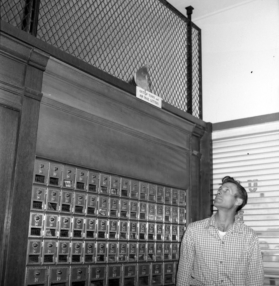 Pigeon in the post office, 1959