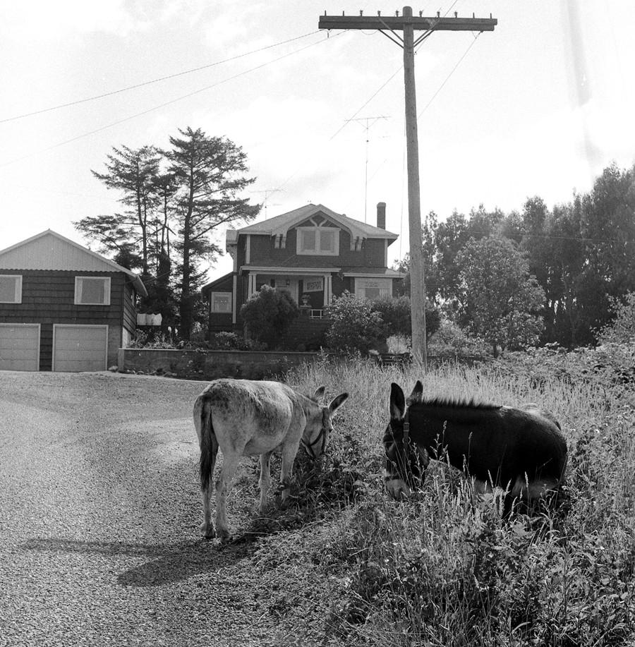 Caroline Avenue, 1956