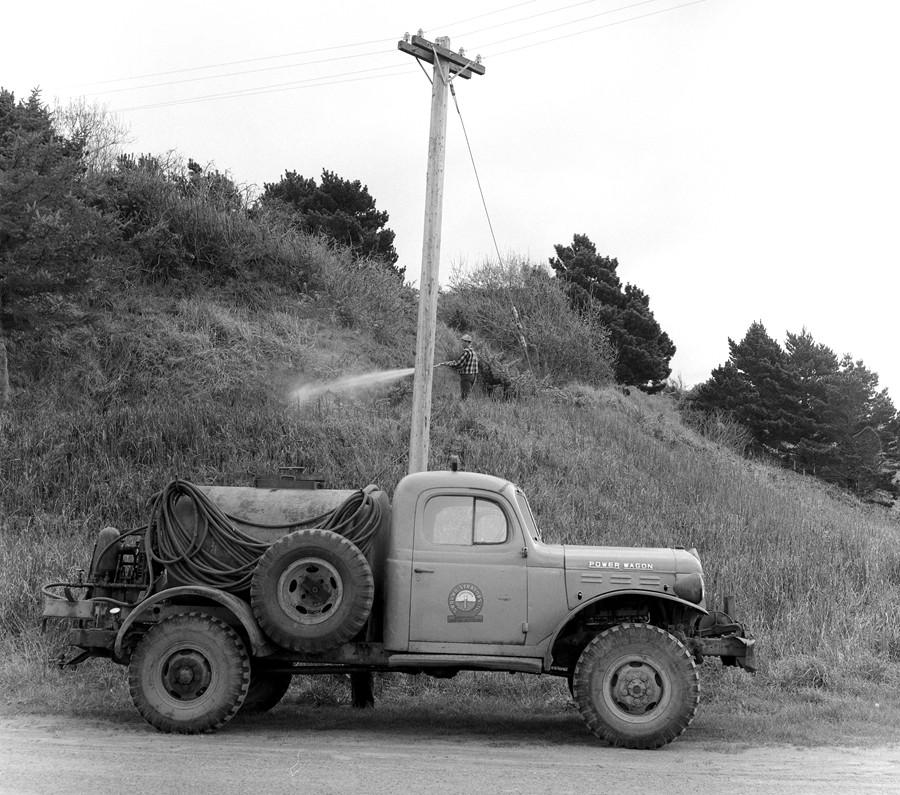 Spraying gorse, 1958