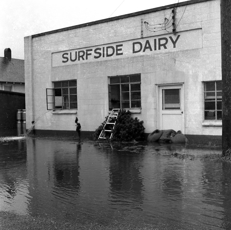Flooded Surfside Dairy, 1955