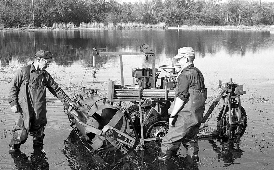 Local cranberry bog 1974