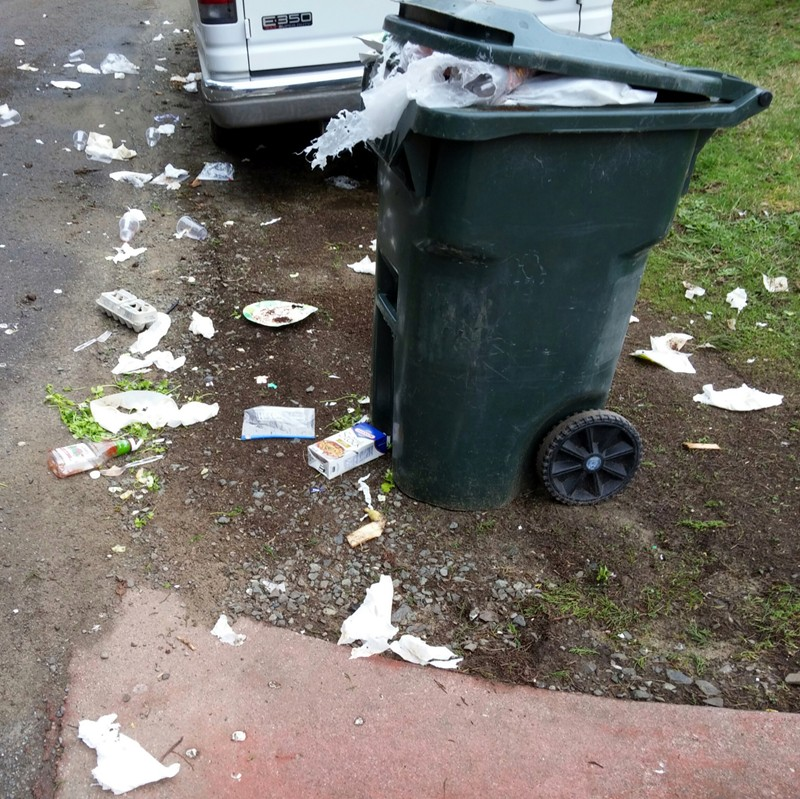 Overflowing garbage can attacked by crows