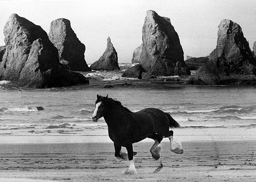 Baron the Budweiser Clydesdale 1982