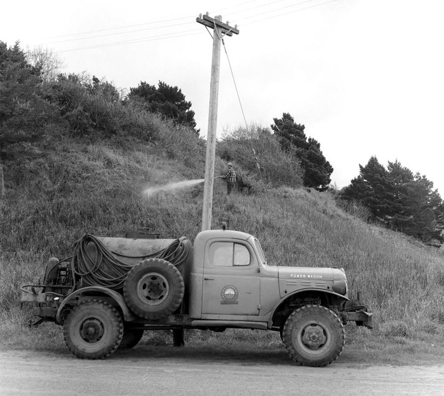 Spraying gorse 1958