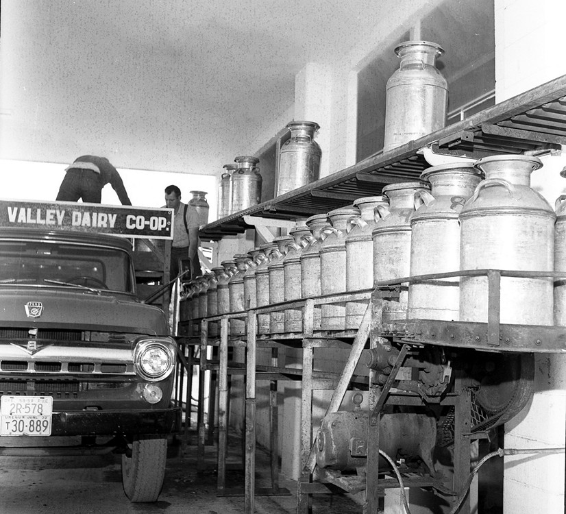 a dairy farmer unloads milk at the Coquille Valley Dairy Co-op in 1958